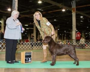 Reserve Winners Dog - Judge Gloria Gerringer